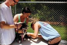"""Dog Days of Summer / Our first fundraising dog wash """"Dog Days of Summer"""" raised almost $2,000!  With these funds we have been able to take in needy cats and dogs, treat them and find them furrever homes.  We truly thank our loyal clients and community for their support!"""