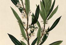 Botanicals / by Susan McCarrell