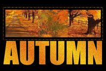autumn / the most colourful season in the year!