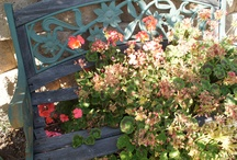 Gardens,Patios & Porches / by Becky Lang