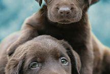 Cute animals :) / by Jillian Garcia