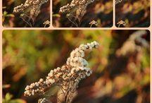 Herbstlicht / Der Herbst in seinen schönsten Farben!