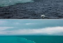 Our Beautiful Oceans / This is where your fish comes from :)