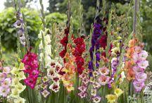 выращивание садовых цветов