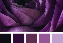 Цвета / Фиолетовый