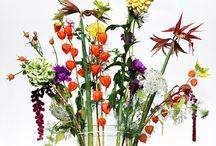 Pflanzen - Hausdeco