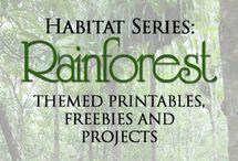 rainforest and chocolate
