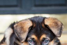 cagnolino carino carino