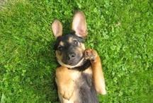 Puppies  / by Anita Cory
