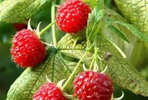 fruitiers obligatoires