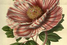 Botanical Flora n Fauna