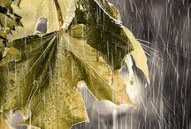 rain / by Frances Hood