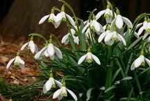 Herbář / Týká se 12-ti jarních kytek + 3 dřevin, které rostou u nás v České republice.