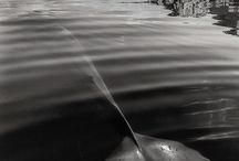 Ⓟe♈  Animatopia H²O ⚓ / Animais dos mares, lagos e rios de todo o mundo (fotos, photos, ilustrações, desenhos e mais).