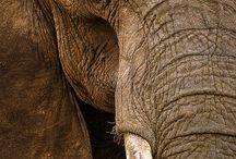 Elephants photos