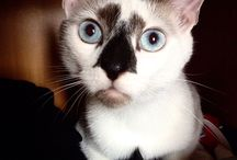 Amasing Cats. Cats we LoVe. / Cats