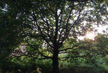 Mein Garten in Ostfriesland / Momentaufnahmen meines ca 5000qm großen, naturnahen Gartens in Moormerland, Ostfriesland