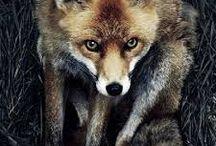 """Animal Inspiration / """"Im bardziej poznaję ludzi, tym bardziej kocham zwierzęta"""" G.B.Shaw"""