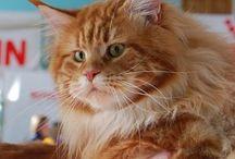 Выставка кошек 07-08.03.2015
