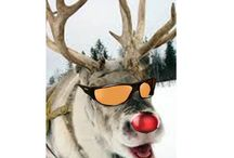Jolly Time of Year! / The snow, the shinny toys, that bright jewelry...wow, such glare! Don't forget to wear your Haven 'fits over' sunglasses and clipons this jolly season.