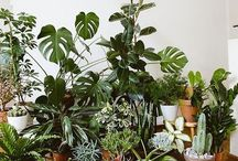 》plants《