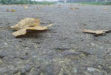 Priroda / Sve prirodno.. :)