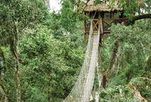 Tree House Lodges