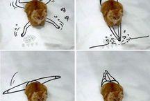 Urocze koty