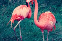 flamingo lovvrr