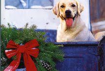 My Boone dog / by Felicia Todd