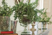 Decorating With Rosemary