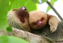 Sloths / by Wearable Eco Art