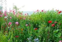 Bloementuin / Garden flowers