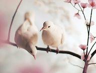 Cherry Blossomese