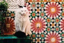 Cats / I adore them!