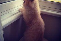 Miskin / #cats