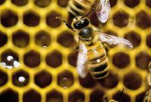 All About BEES / The Amazing world of BEES! WHO, WHAT, WHEN, WHERE, WHY of the Bee, Beekeeping, Habitats...