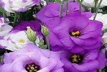 virágok .