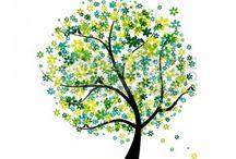 Grafica oak