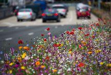 Planting my wild flower meadow