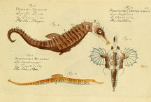 Illustrations ~ natural history / by Jacqueline