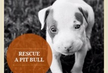 Pitbullness / by Trisha York McPhail