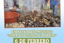 Fiestas Costumbristas Chiloe