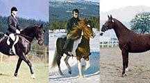 fodertillskott häst