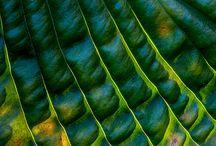 leaves & tree