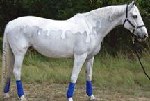 Clipped horses