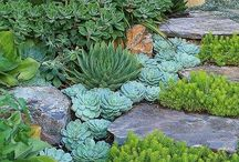 Simply Succulent... / Succulents of all types and colors. / by Linda Aarhus