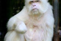 REF: Monkeys