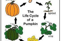 Lifecycle pumpkin