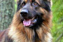 Hund - tiårsgave